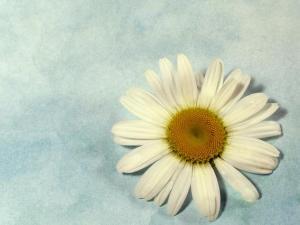 Basic Daisy