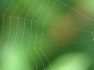 spiderweb-1372905-640x480