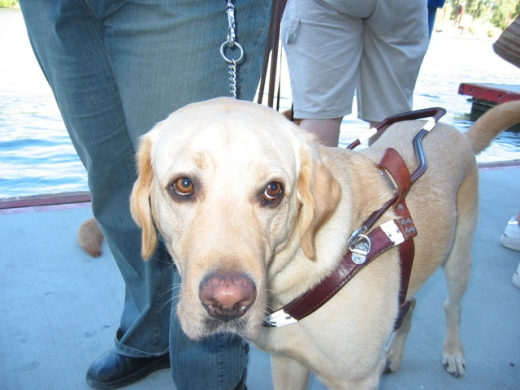 guide-dogs-1485725-640x480