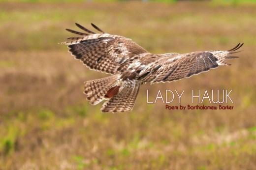Lady-Hawk-Poem-by-Bartholomew-Barker