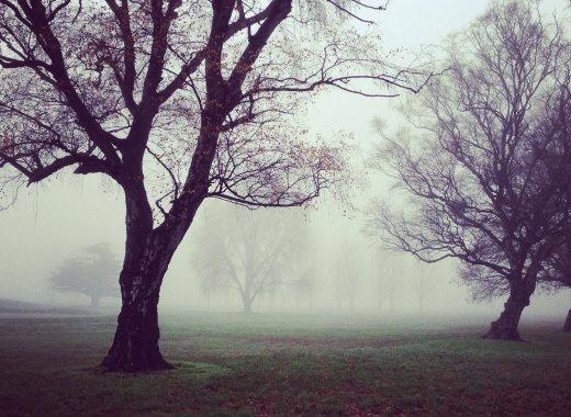 Forest-Fog.jpg