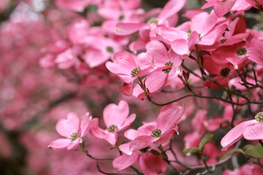 spring-4724825_1280.jpg