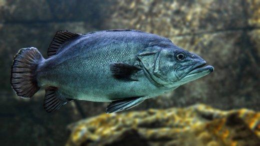 fish-3322230_1280.jpg
