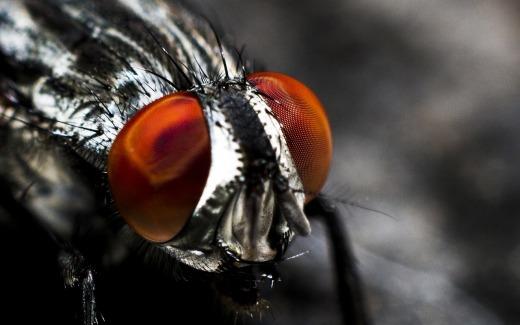 fly-1869974_1280.jpg